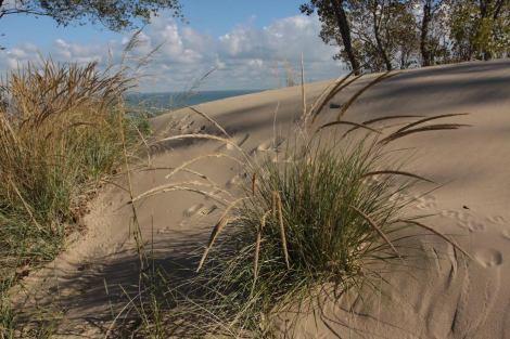 marram grass on steep dune - credit Bob Daum copy